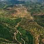 Los montes de Castilla-La mancha: Estructura de la propiedad forestal en Castilla-La Mancha.