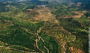 Estructura de la propiedad forestal en Castilla-La Mancha LM2
