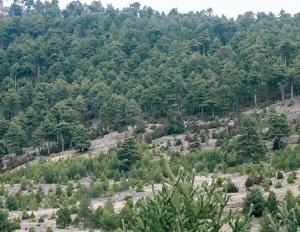 La ordenacion de montes de los particulares en Castilla-La MAncha GF1