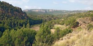 Resultado del tercer inventario forestal en Castilla-La Mancha MF2