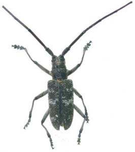 Contribucion al estudio de los Coleoptera F5