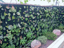 Fotografia de portada Jardineria vertical jardines que trepan muros 3