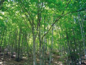 Parque Natural del Hayedo de Tejera Negra ENP9