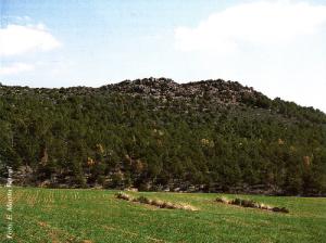 Vista general de árboles afectados (Foto: Enrique Martín Bernal)