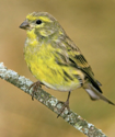 Prioridades cibeles parar la perdida de biodiversidad en europea