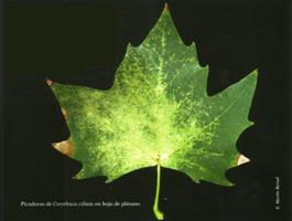 Picadura de Corythuca ciliata en hoja de platano (Foto: E. Martín Bernal)