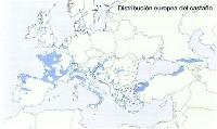 Distribucion de Castanea sativa en Europa