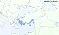 Distribución de Pinus brutia en Europa.