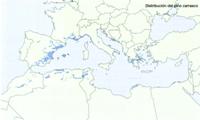 Distribución de Pinus halepensis en Europa.