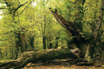Noticias forestales8