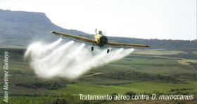 Tratamiento aéreo contra D. maroccanus (Foto: Adán Martínez Garbayo).