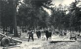 MFO2 Historia de los aprovechamientos de Pinus silvestrys L de Cercedilla y navacerrada 1873_1990