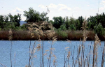 MFO4 Identificacion de buenmas practicas para la integracion paisajistica de las repoblaciones en la Comunidad de Madrid