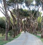 MNU1 Gestion del Patrimonio Verde de Madrid