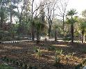 MNU7 Nuevos principesen el Real Jardin Botanico CSIC la familia Palmae