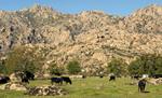 ENP15 Reserva de la biosfera de Cuenca Alta del rio Manzanares