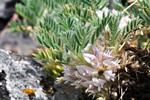 EP4 La flora protegida de Penalara