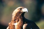 EP6 Fauna protegida en la Comunidad de Madrid