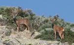 EP9 Genetica de las poblaciones de corzo en el Parque Natural de Penalara