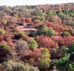 DM3 Efectos de la equia durante la primavera y el verano de 2009 en las masas forestales madrilenas