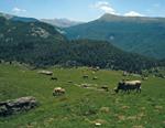 CT4 PAX AVANT Conflictos pastorales y su gestion Ejemplos de establecimientos de limites en los estiveos
