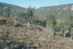 Esp2 La planificacion estrategica nacional en materia de uso energetico de la biomasa forestal residual