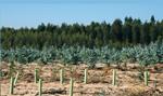 Esp4 Biomasa estrategia nacional estrategia empresarial