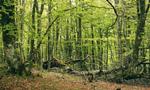 CT1 La estimacion de la biodiversidad