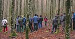 Formación Forestal: La formación forestal en Euskadi