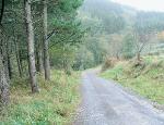 GF13 Agrupaciones de montes privados en torno a una pista forestal de primer orden en el territorio historico de vizcaya