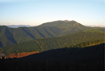 Gestión Forestal: Primeros datos de crecimiento y tablas de producción de <em>Pinus radiata</em> D. Don en Balmaseda, para un régimen de claras fuerte y turno de 25 años