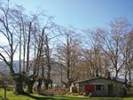 Gestión Forestal: Trabajos de recuperación de robles y hayas trasmochos en Euskadi
