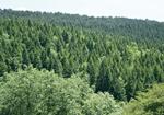Gestión Forestal: La certificación forestal