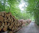 GF18 Desarrollo de la certificacion forestal en Euskadi