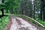 Gestión Forestal: <em>Pinus insignis</em>: Madera con homologación europea