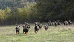 GF20 Peritaciones de danos ocasionados por la fauna silvestre a la ganaderia en el Pais Vasco