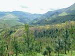 Historia Forestal: 30 años de asociacionismo forestal en el País Vasco