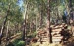 Historia Forestal: Cien años de política forestal de la Kutxa