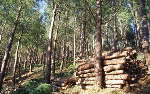 HF4 Cien anos de politica forestal de la kutxa