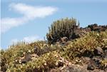 EspI1_ El control de las invasoras biologicas en dificil reto ambiental