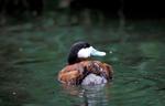 EspI6_Una apuesta por la conservacion de la biodiversidad