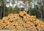 Colaboraciones Técnicas: El bosque productor