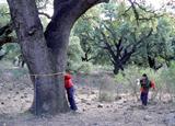 Esp3_ Trabajos de inventario forestal en montes gestionados por la Comunidad Autonoma de Andalucia