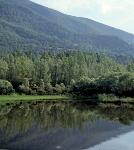 Esp4_Los inventarios forestales nacionales una herramienta para la gestion la planificacion y la investigacion