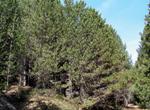 CT3_Investigacion sobre los resultados anormales encontrados en el cotejo diacronico entre los dos ultimos Inventarios Forestales Nacionales en Navarra